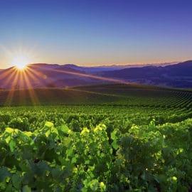 King Valley Winery Spring bud burst sunrise